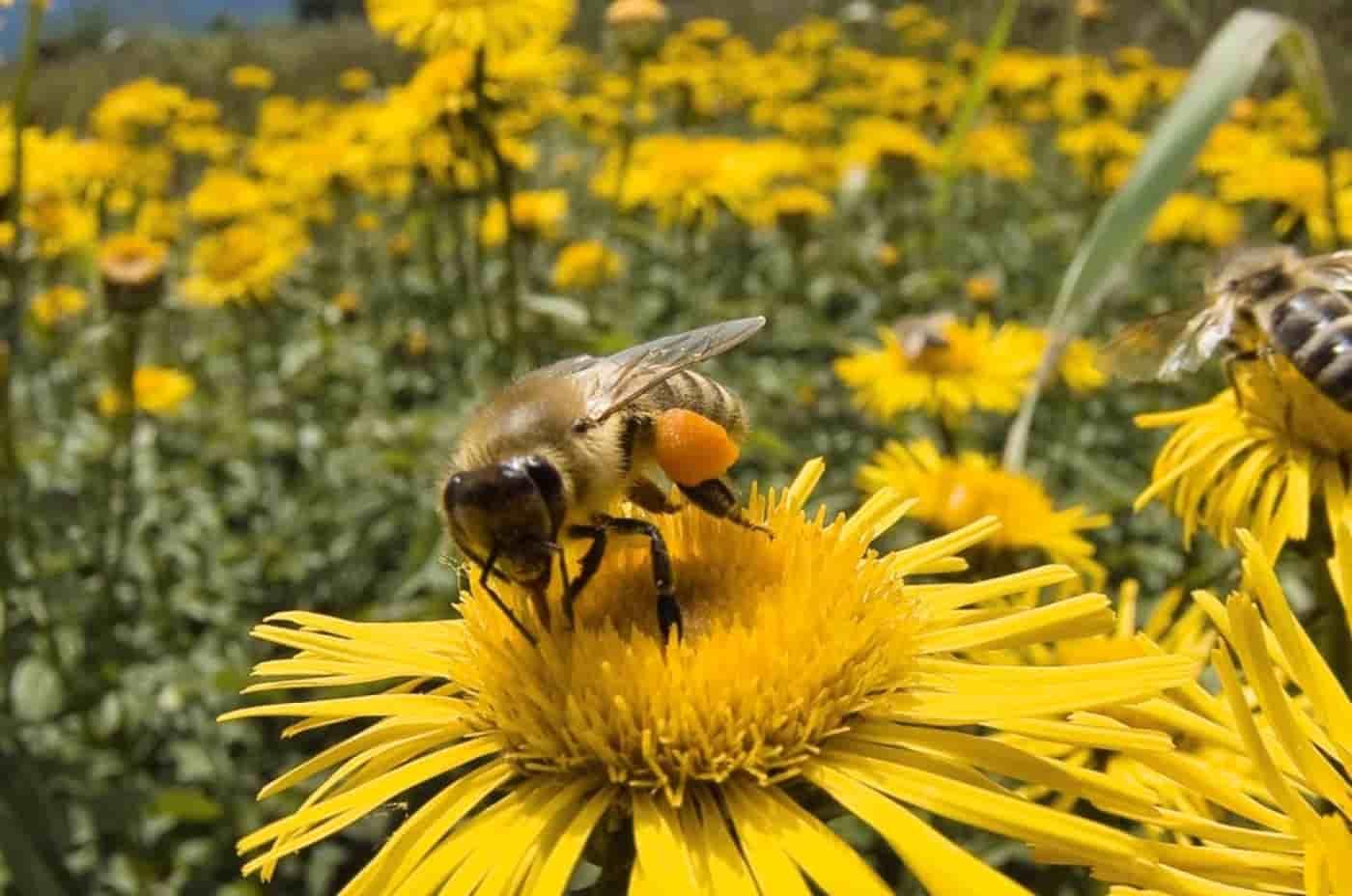 miel de flor de mil flores